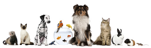 Group of pets sitting, white background.