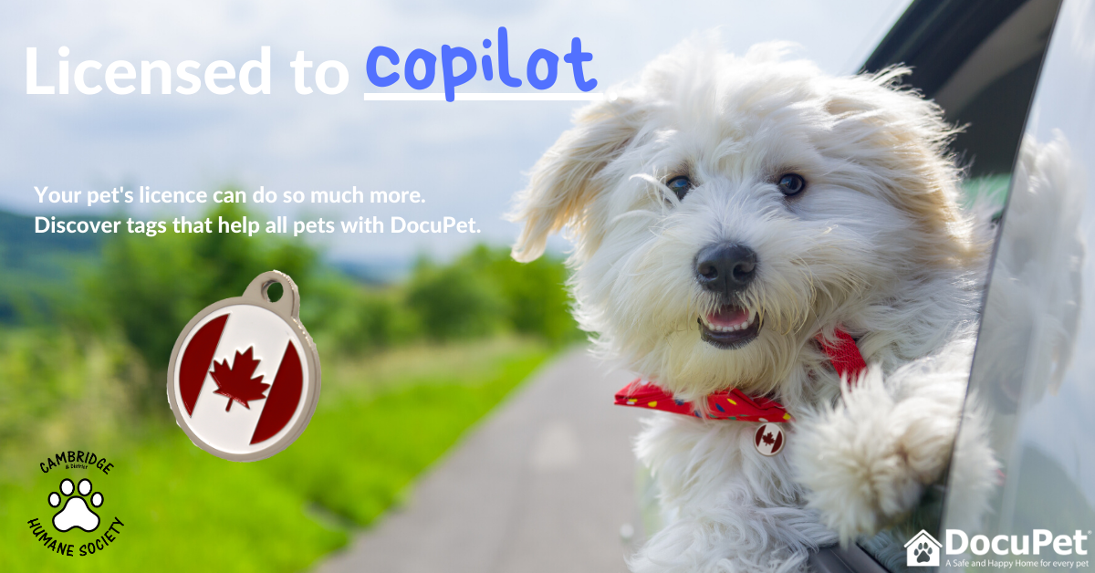 Licensed to copilot. Your pet's license can do much more. Discover tags that help all pets with DocuPet.